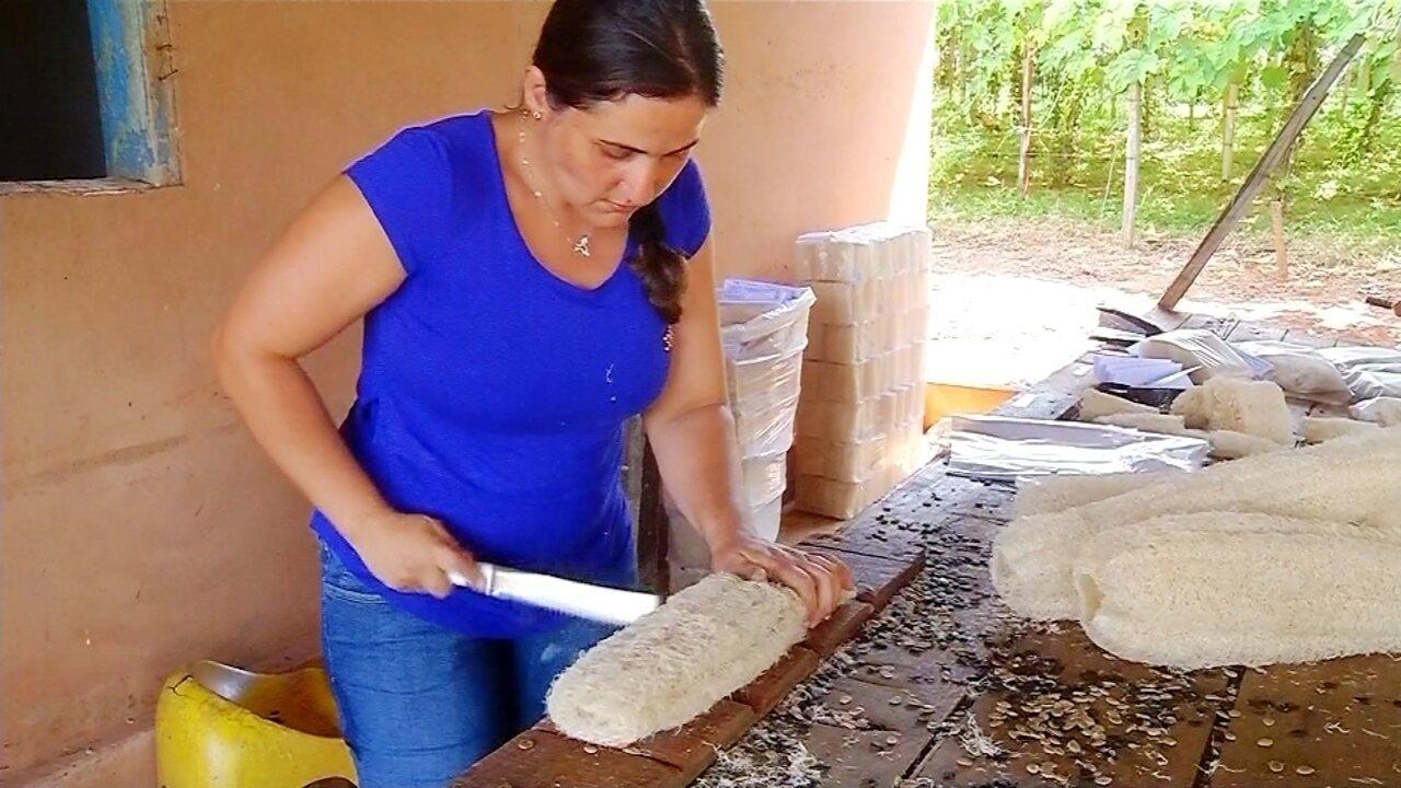 Bucha caipira ainda é sucesso entre consumidores