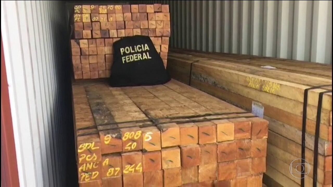 PF faz operação contra extração ilegal de madeira da Amazônia