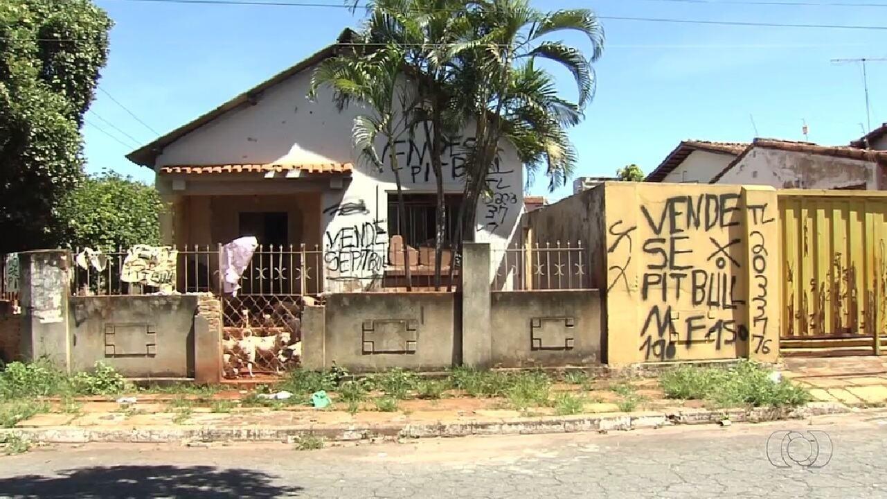 Mais de 20 pit bulls são encontrados vítimas de maus-tratos dentro de casa em Goiânia