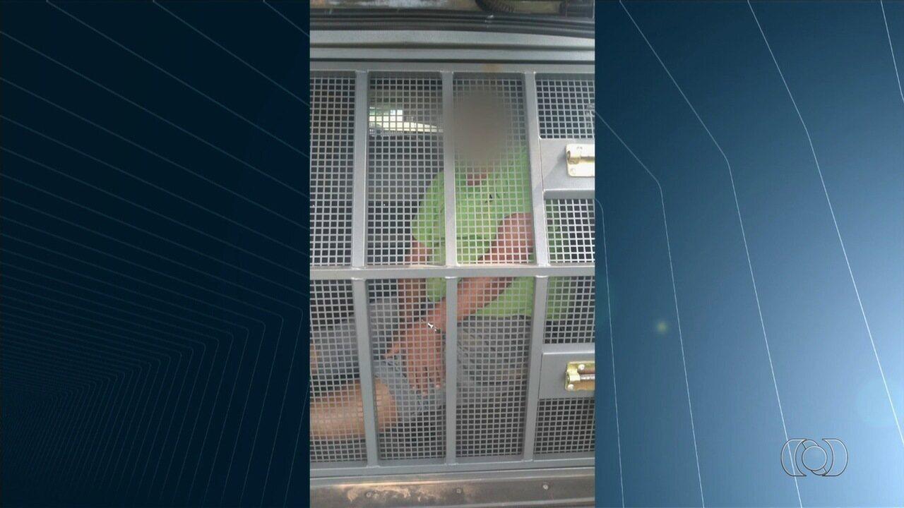 Padrasto suspeito de abusar de enteada de 12 anos é preso em Goiás