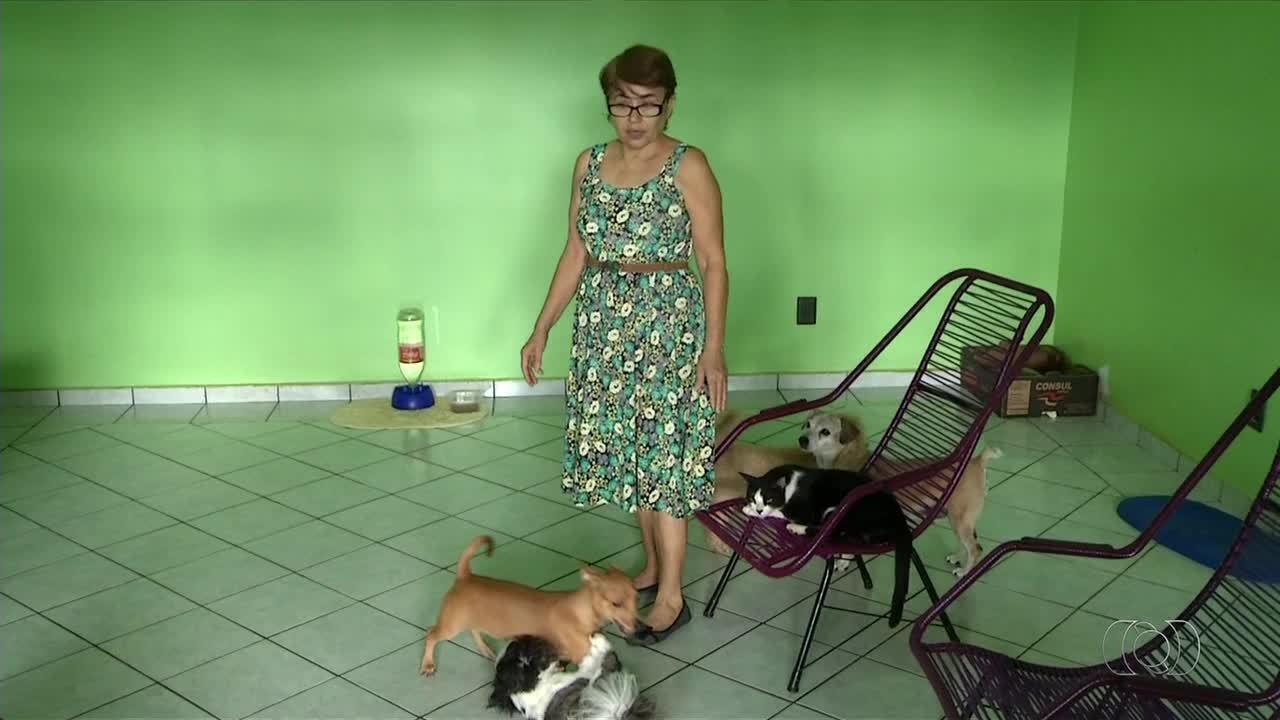 Moradores desconfiam que gatos e cães estão sendo envenenados em quadras de Palmas