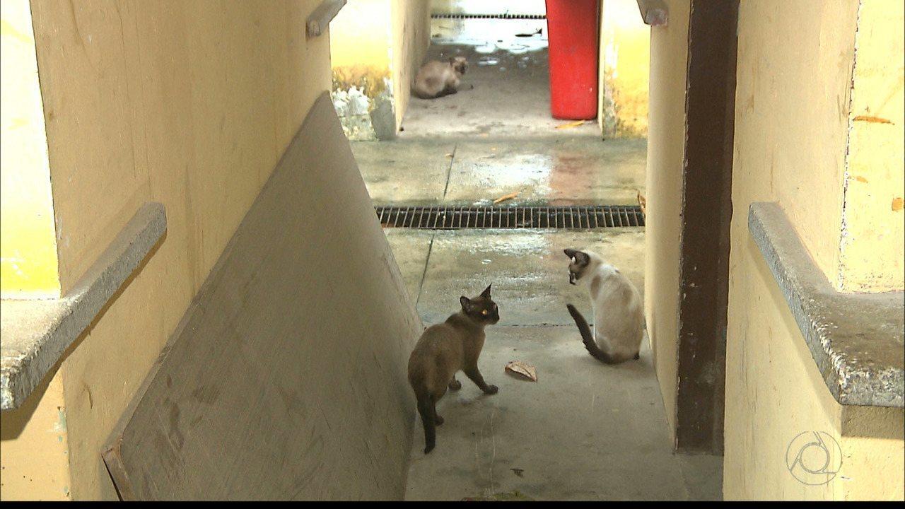 Gatos são mortos na Casa do Artesão em João Pessoa