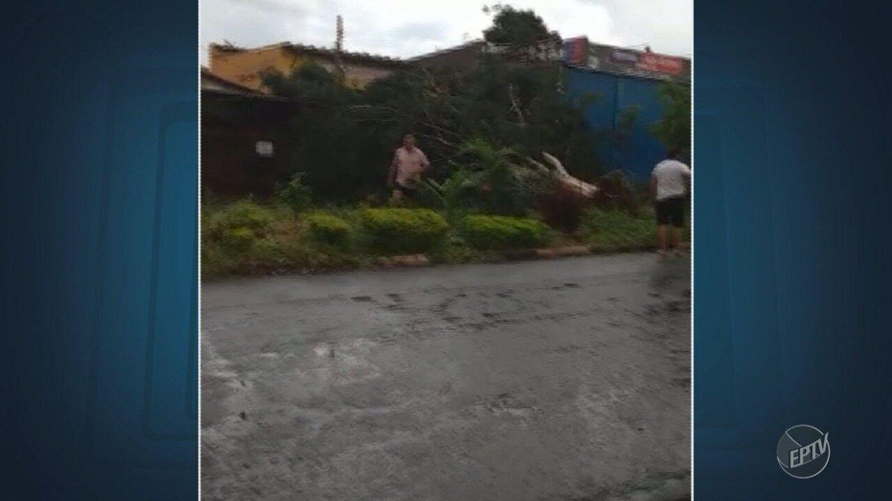Chuva do início da noite em Campinas derruba árvore