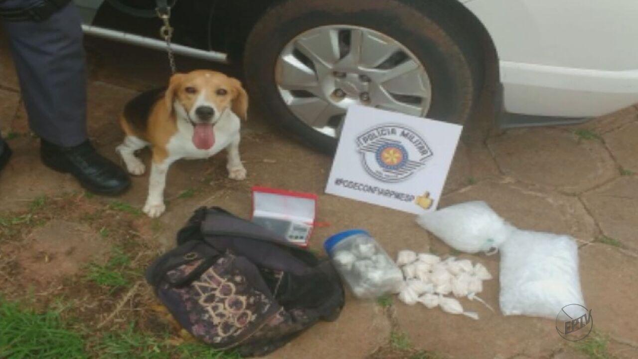 Cachorra da PM de Araraquara dá prejuízo de R$ 40 mil ao tráfico de drogas
