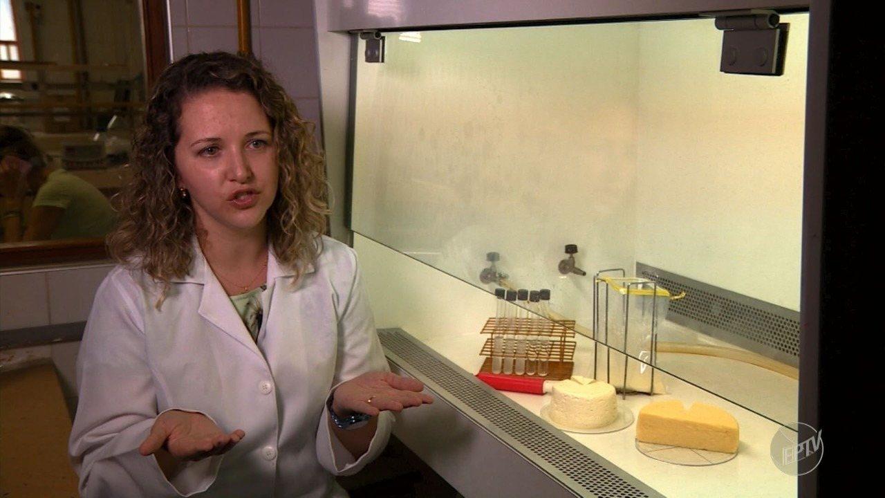 Pesquisa da Unicamp com 'bactérias do bem' pode beneficiar produtores de queijo artesanal
