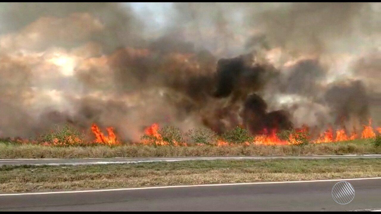 Incêndio atinge vegetação às margens da BR-324 e causou risco aos motoristas