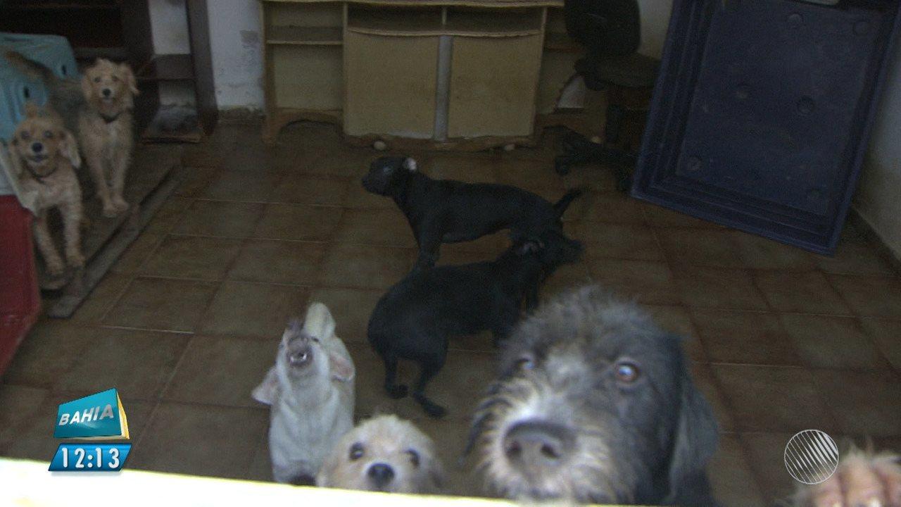 Mulher cria mais de 60 cachorros em casa no bairro de Brotas
