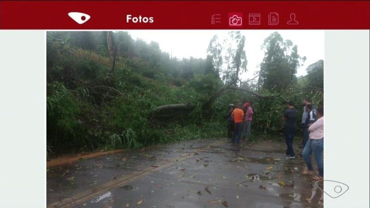 Árvore cai e bloqueia estrada em Muniz Freire, ES