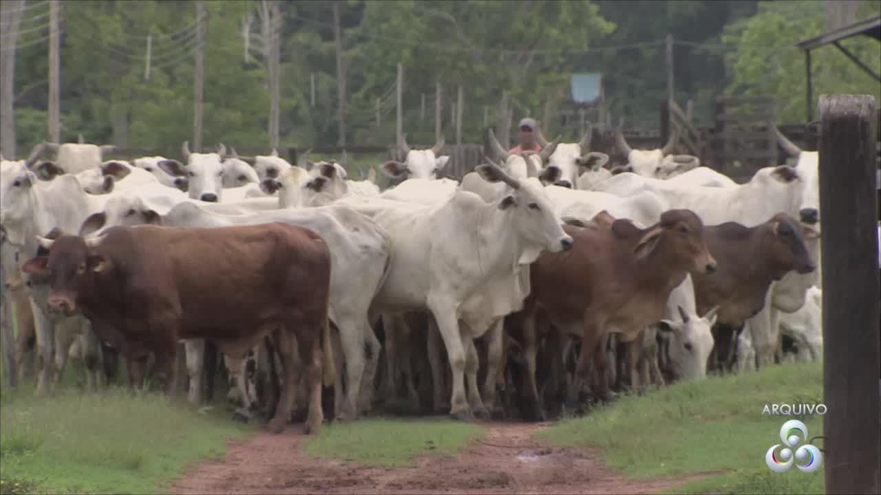 Diagro alerta criadores para vacinação contra brucelose e tuberculose em bois e búfalos