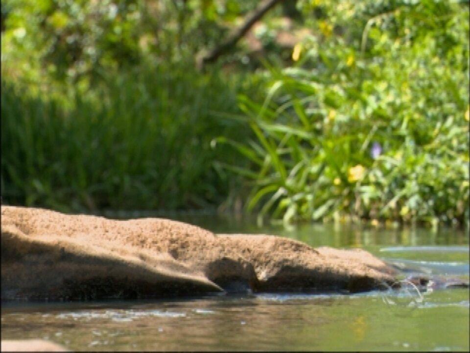 Das nascentes ao abastecimento: série mostra como está a preservação dos recursos hídricos