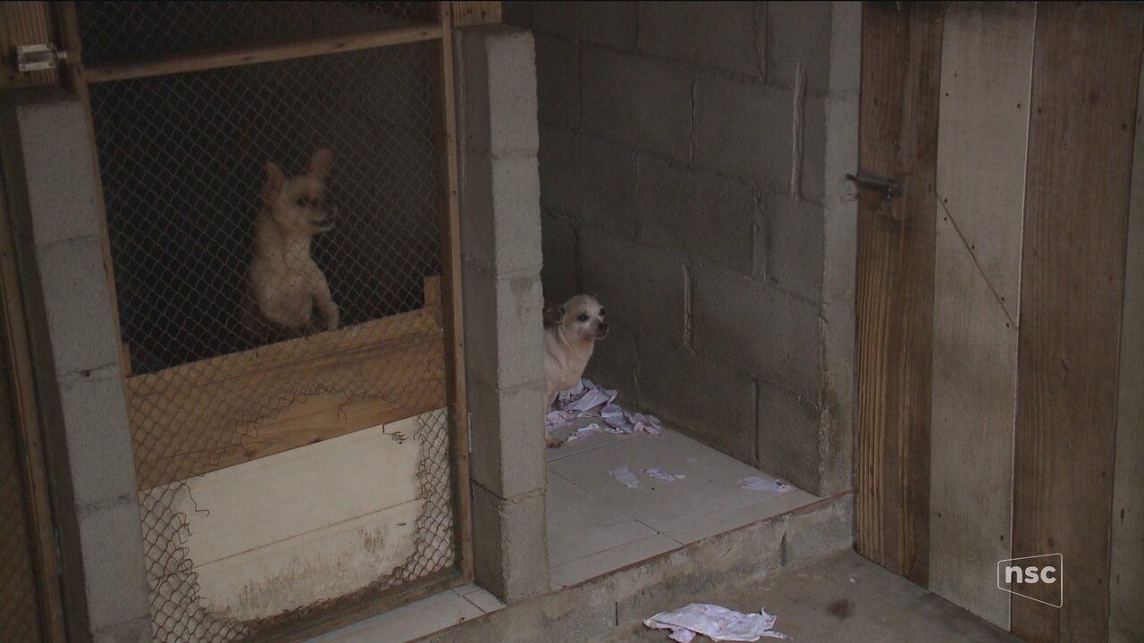 Doentes, sem água e sem comida, cães são resgatados de canil clandestino em Jaraguá do Sul