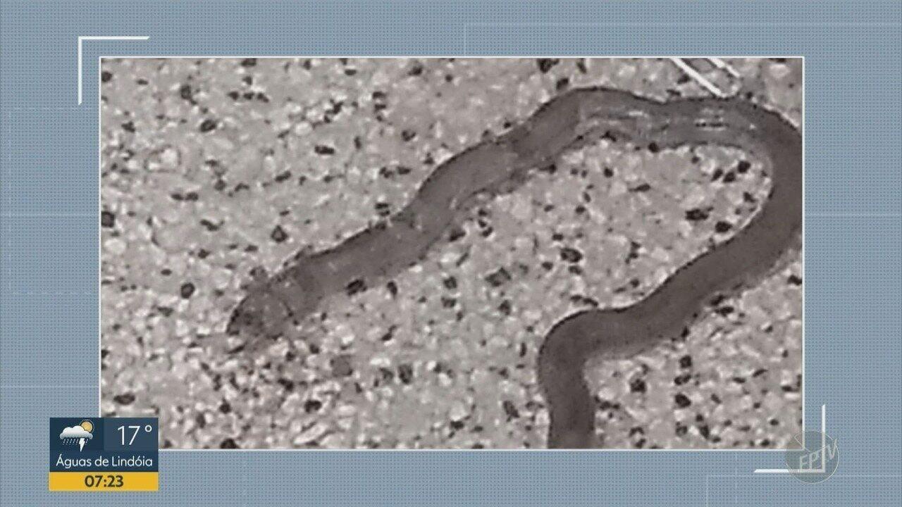 Cobra aparece em Hospital Ouro Verde de Campinas e assusta funcionários