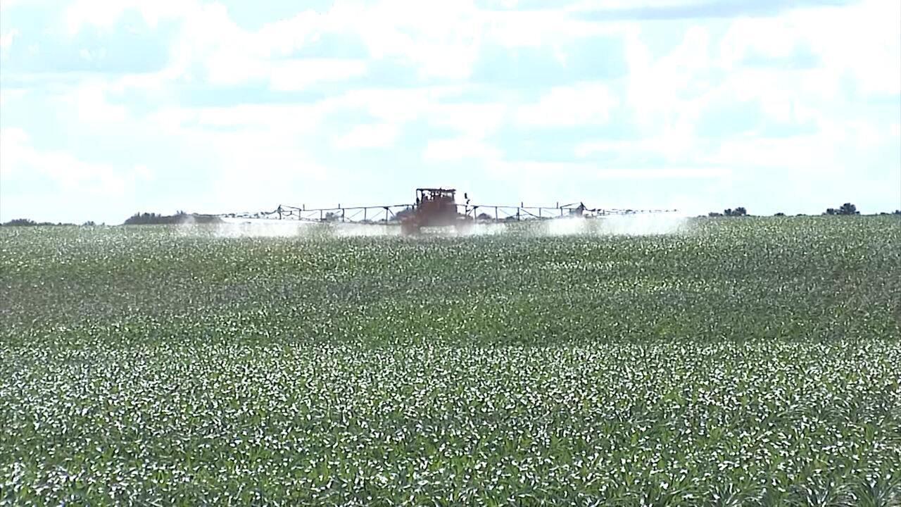 Mirante Rural destaca plantio da safrinha de milho no Maranhão