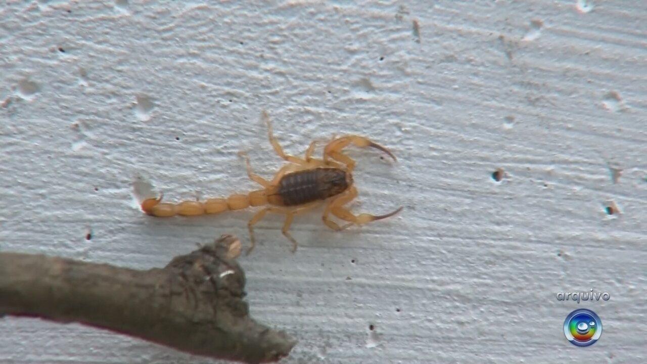 Menino que morreu após picada de escorpião foi transferido por falta de soro em hospital