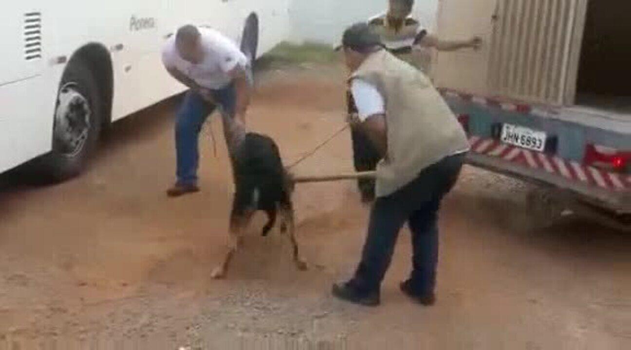 Equipe da Zoonoses do DF controla cão enfurecido que invadiu ônibus em garagem