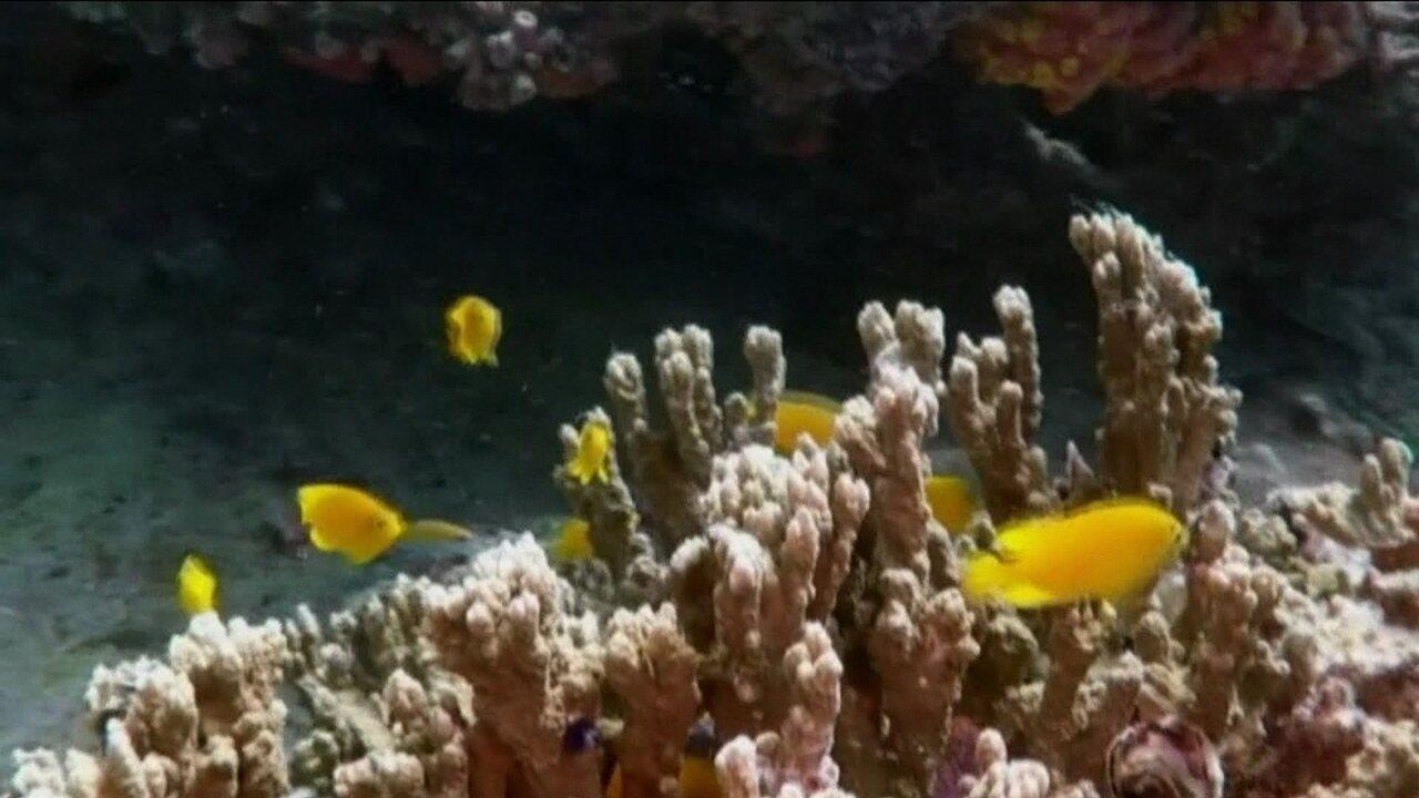 Austrália investe R$ 1 bilhão em barreira de corais