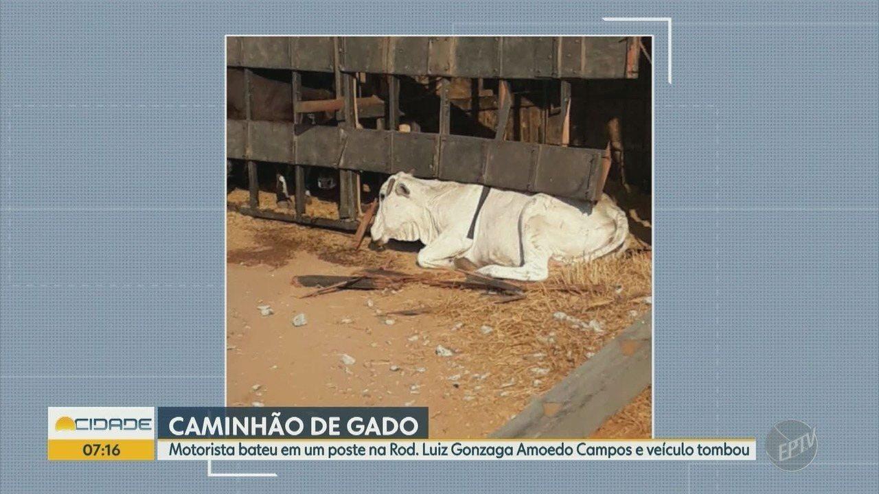 Motorista de caminhão perde controle, bate em poste e veículo com gado tomba em M Mirim