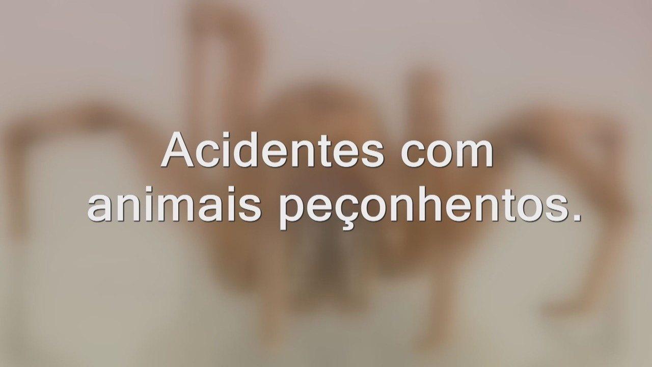 Confira quais são os animais que oferecem riscos e como agir caso você se acidente