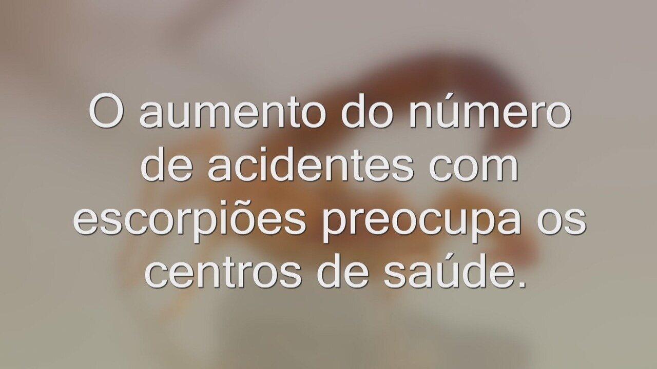 Aproximadamente mil casos de acidentes com escorpiões são notificados por ano