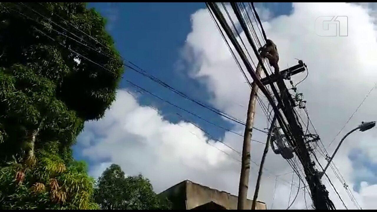 Moradores do Recife resgatam preguiça que andava sobre fios de alta tensão