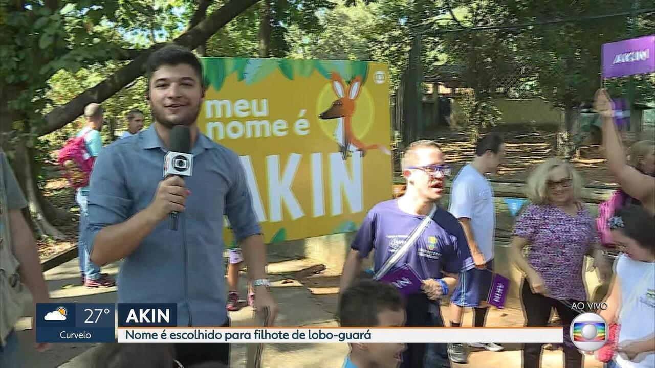 Akin é o nome escolhido para o filhote de lobo guará do Zoológico de Belo Horizonte