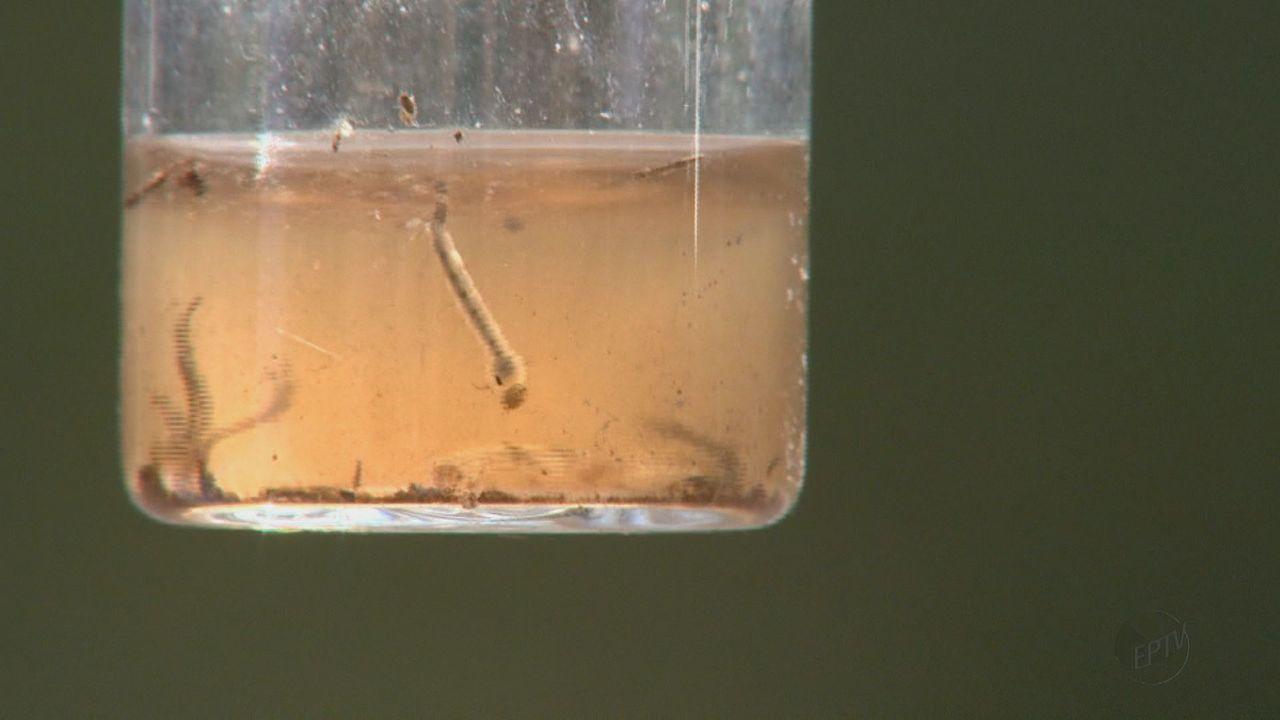 Leme está entre as cidades da região em alerta para surto de doenças do Aedes aegypti