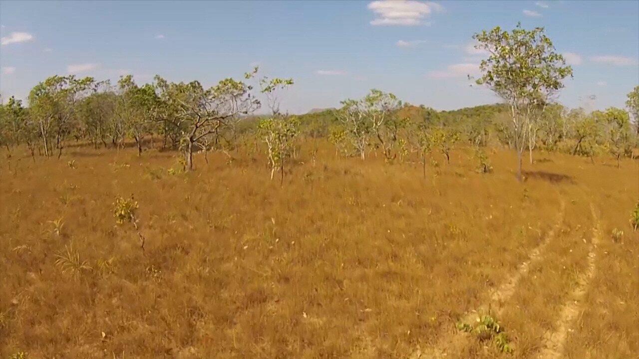 Conheça a iniciativa para evitar o desmatamento de um dos biomas mais importantes do MA
