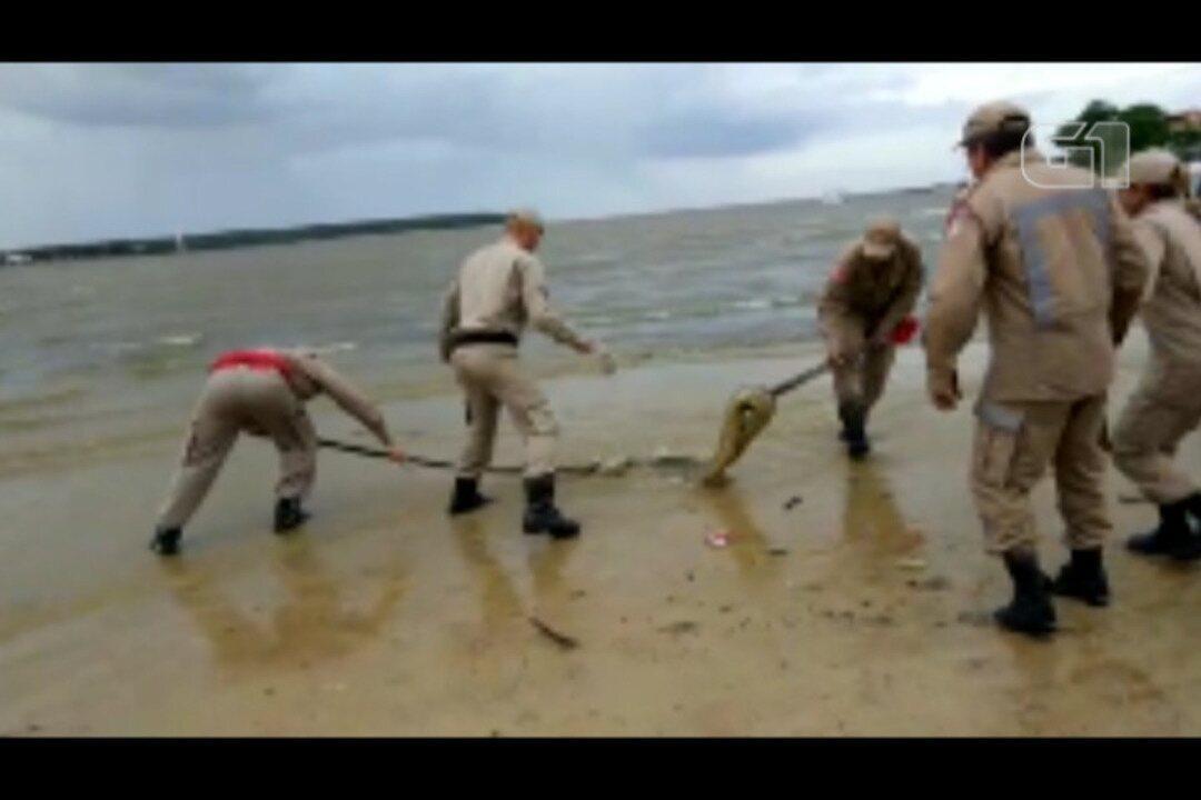 Momento em que o Corpo de Bombeiro faz o resgate da cobra