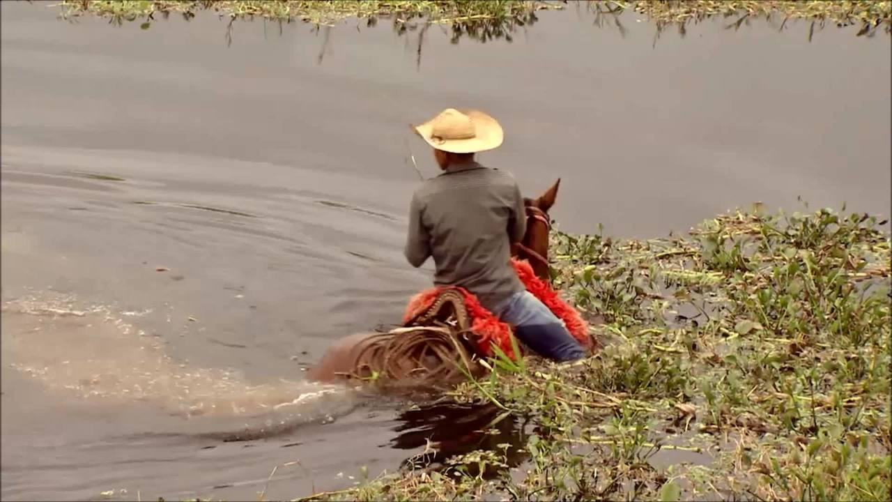 Cavalo gera negócios de R$ 16 bi por ano no Brasil