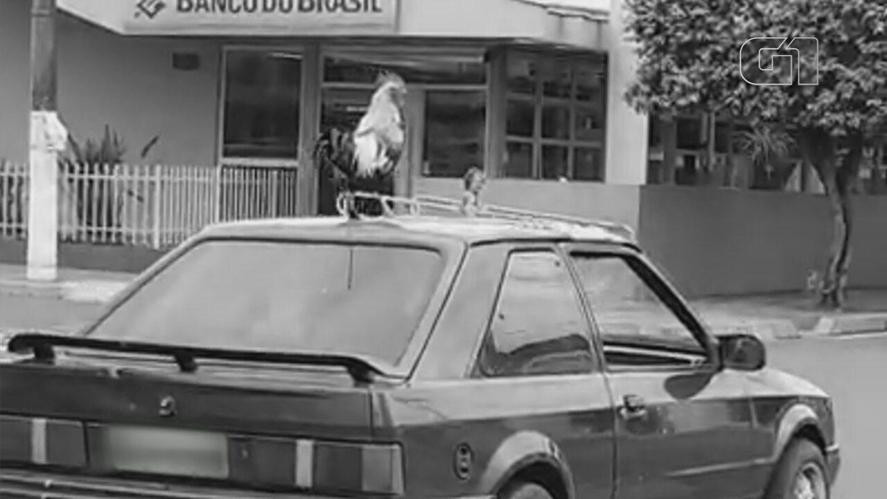 Aposentado passeia com galo no teto do carro e vira atração em Castilho