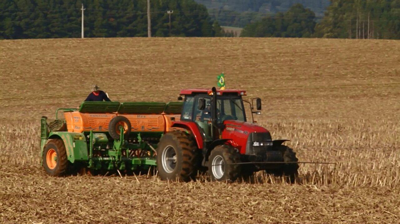 Produtores de cevada plantaram 91% da área