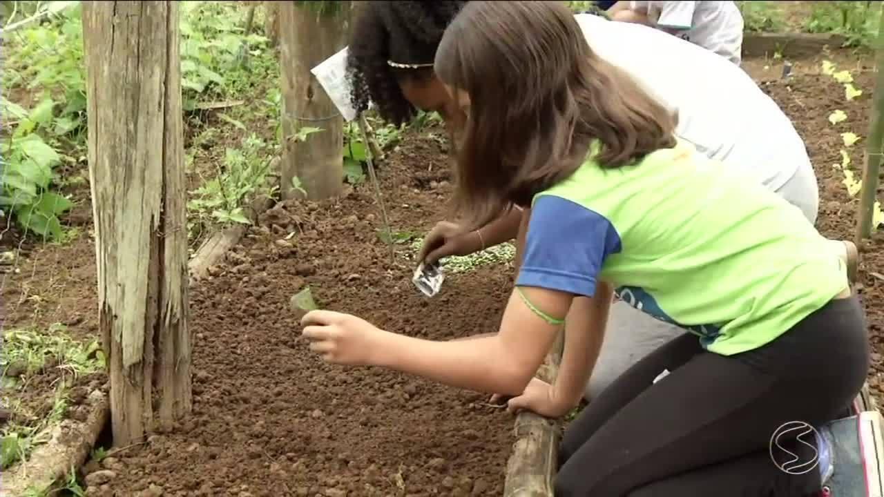 Escola de Resende, RJ, incentiva alunos ao cultivo de horta e mudanças alimentares