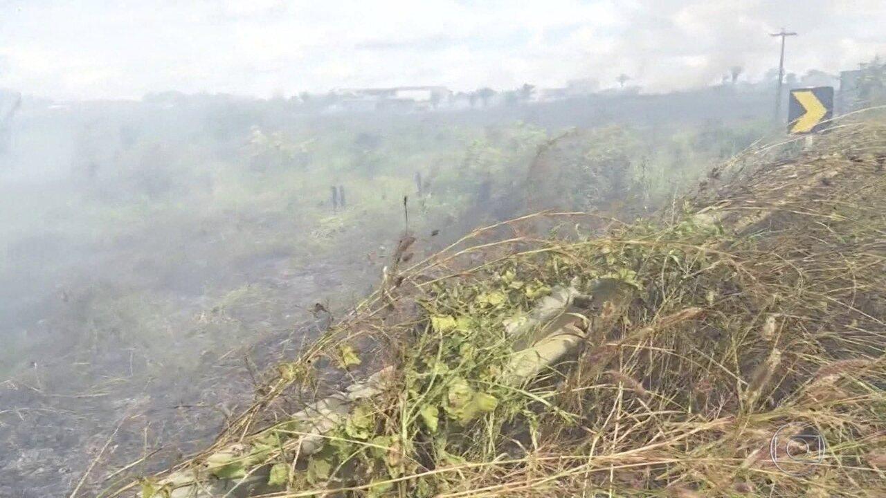 Resultado de imagem para Floresta Amazônica pode virar cerrado devido a desmatamento, segundo pesquisa