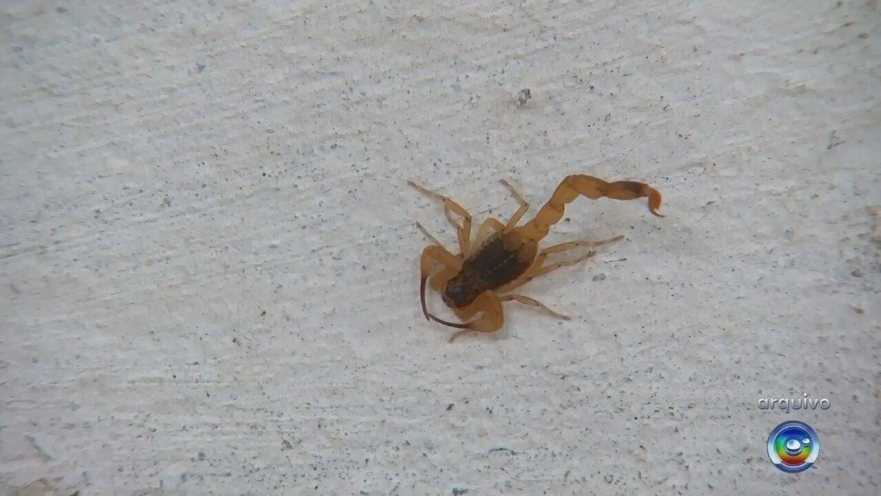 Polícia investiga morte de menina picada por escorpião em Cabrália Paulista
