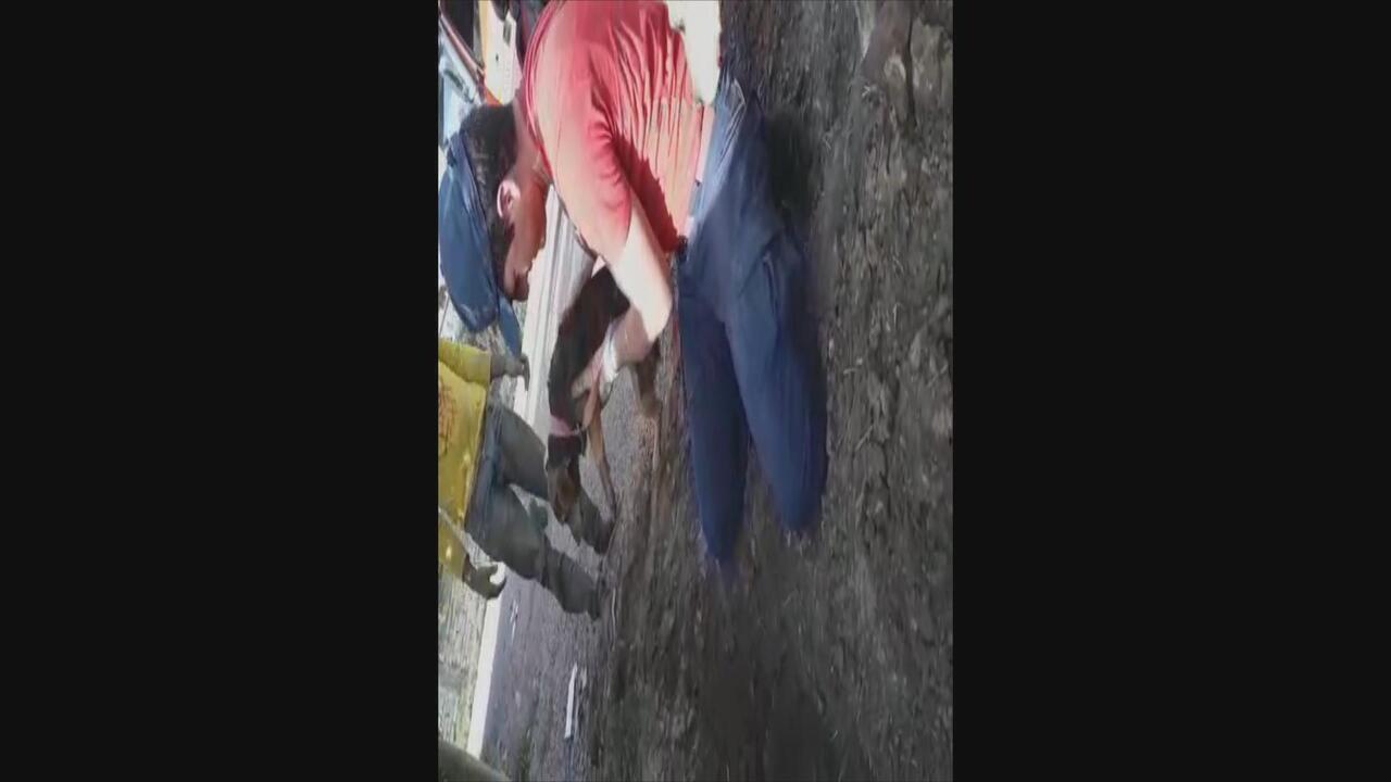 Bombeiros resgatam cadela que ficou 5 dias presa em encanamento em SC