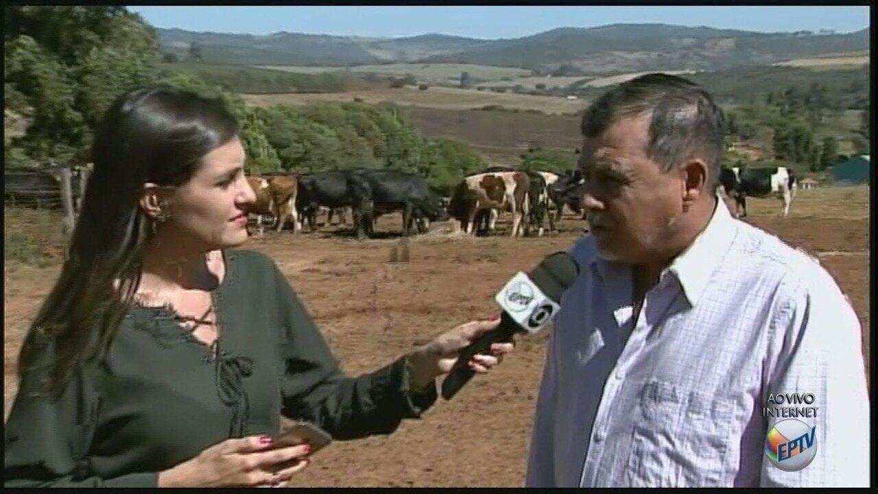 Sete casos de raiva bovina são registrados em Carmo do Rio Claro (MG)
