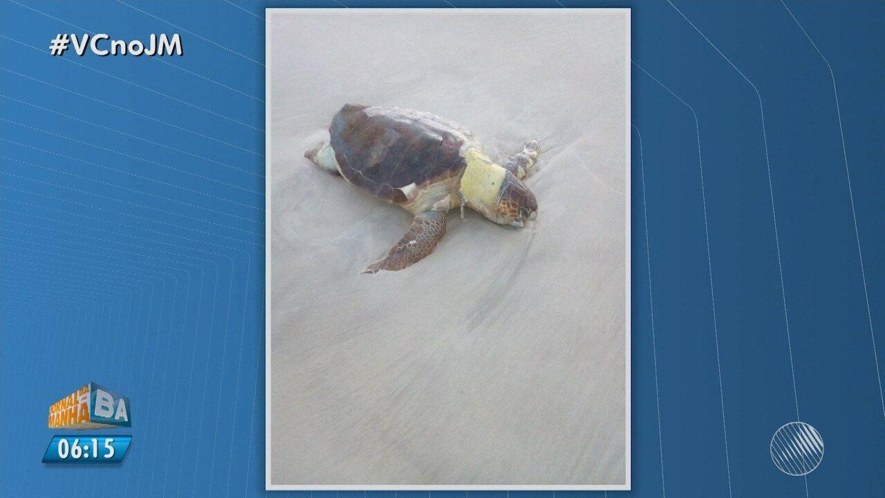 Tartaruga marinha é encontrada morta em praia de Ilhéus