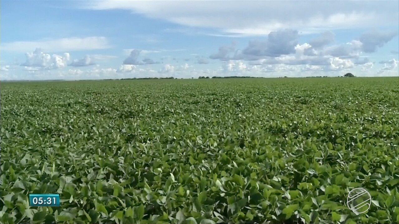 Rural: custo da produção suína e agrotóxico em destaque
