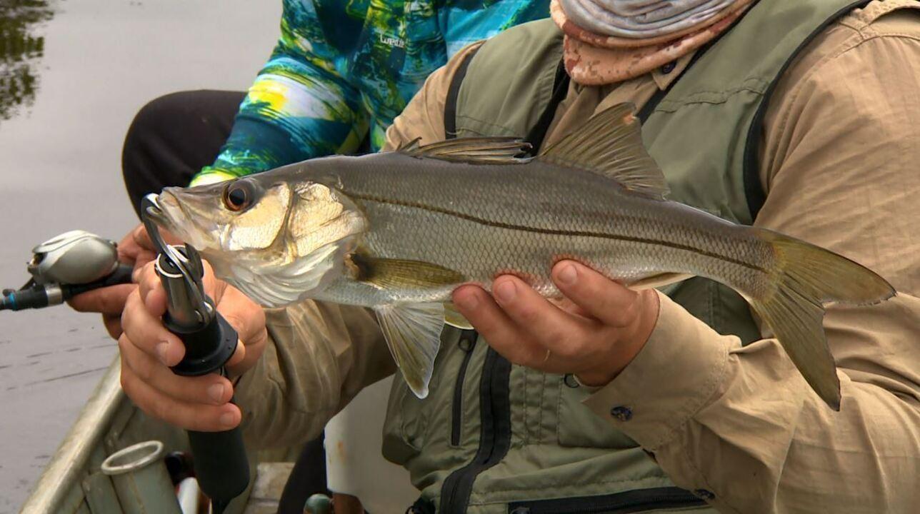 Pescaria de robalos no Peruíbe