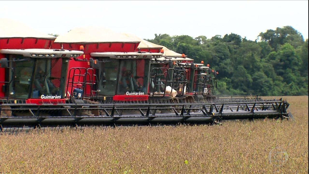 Justiça ameaça tirar do mercado o principal herbicida usado nas lavouras de soja