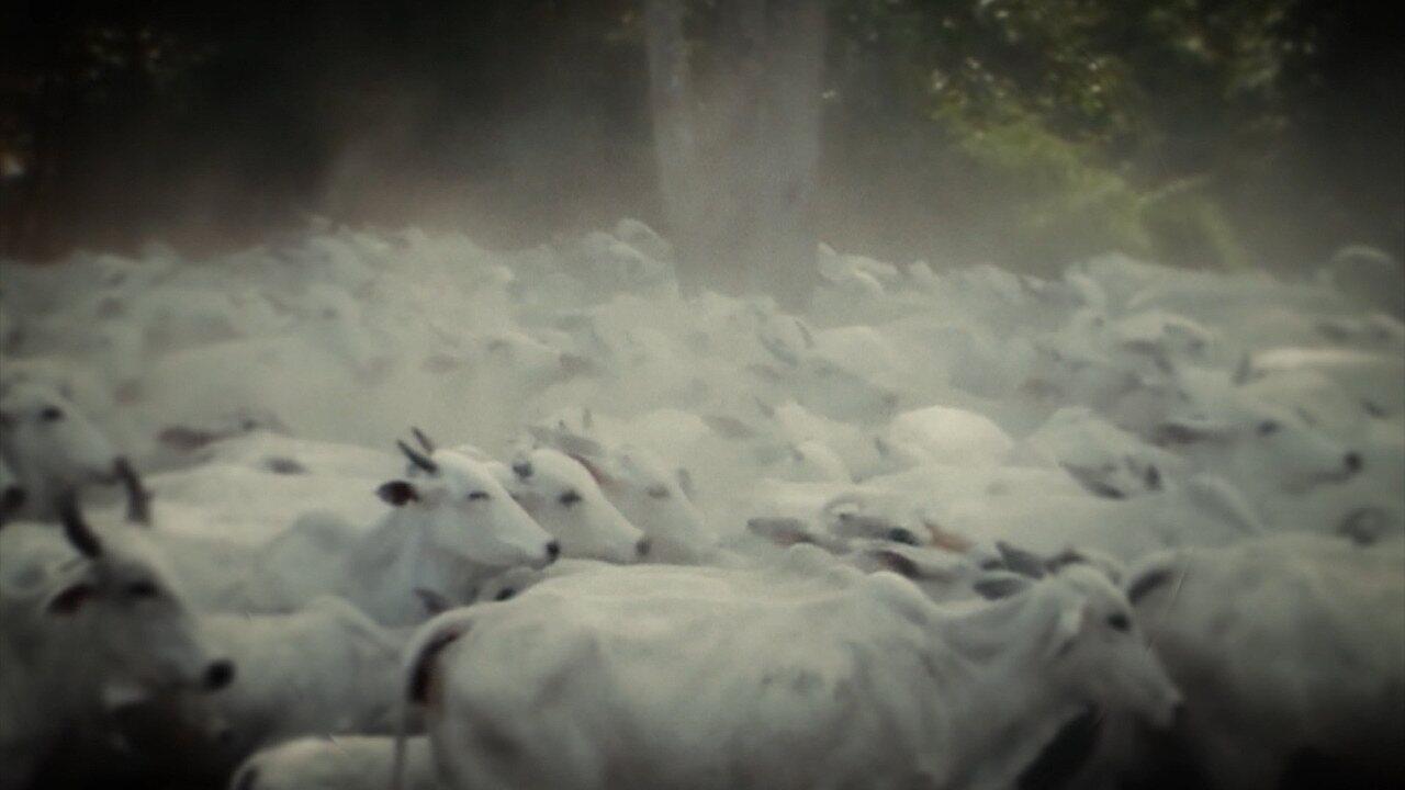 Mirante Rural destaca sobre a importância da vacinação animal contra a febre aftosa no MA