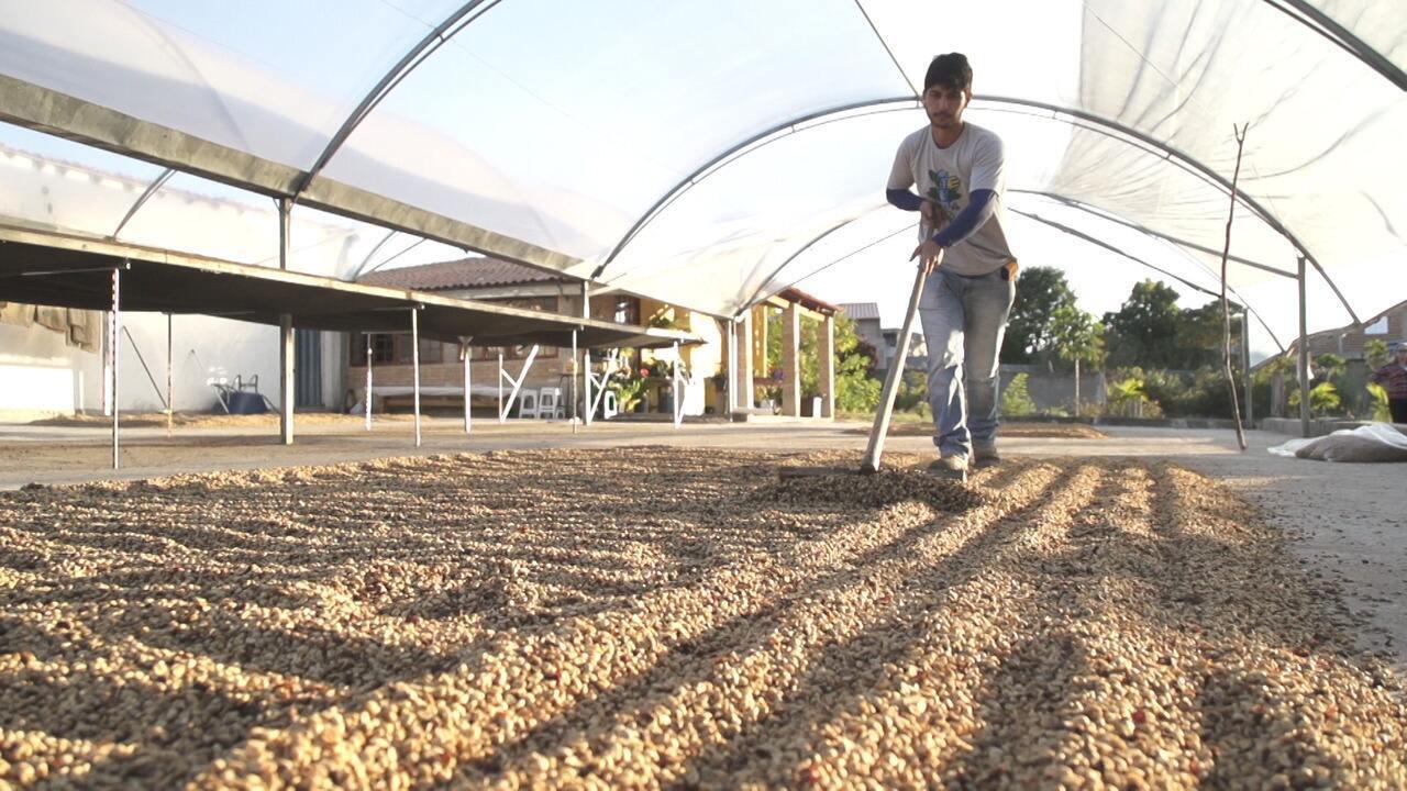 O 'Vumbora' mostra a produção de café em Piatã
