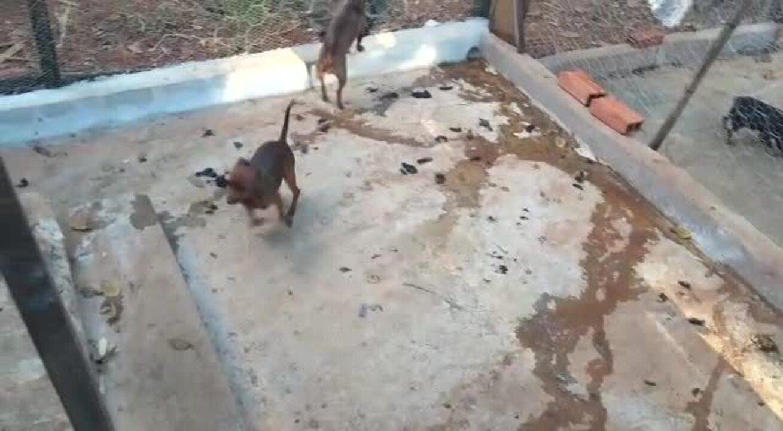 PM fecha canil irregular no DF e resgata 60 cães vítimas de maus-tratos