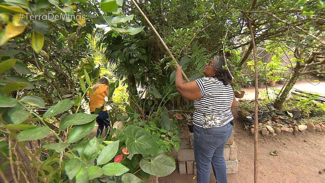 Família de Rio Piracicaba (MG) faz doces com ingredientes do quintal