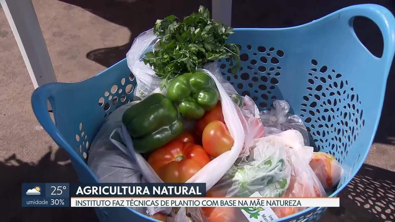 Instituto se dedica ao plantio de alimentos sem adubos químicos ou de origem animal