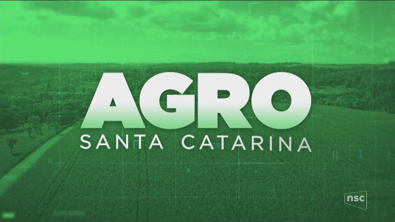 Confira a terceira reportagem da série sobre a agroindústria em SC