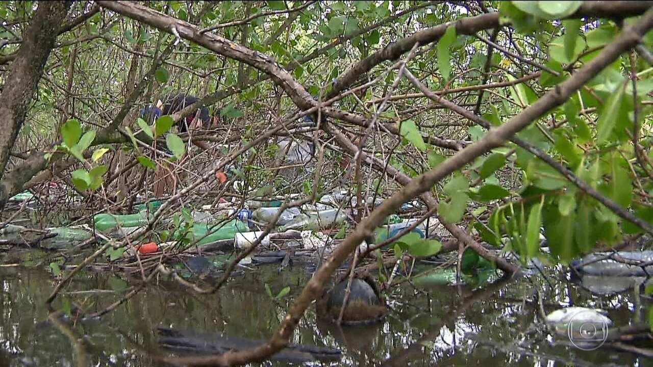 Sujeira nos mangues faz peixes desaparecerem na Paraíba
