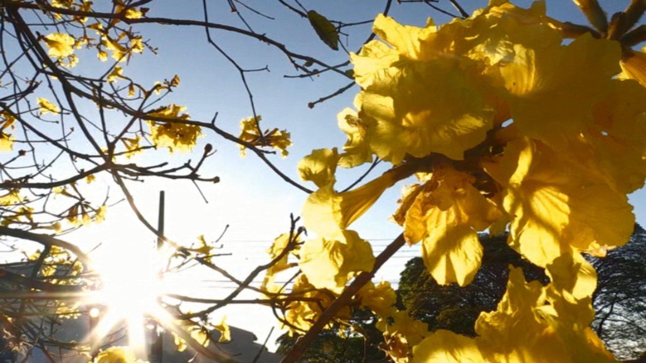 Chegada da primavera transforma paisagens paranaenses