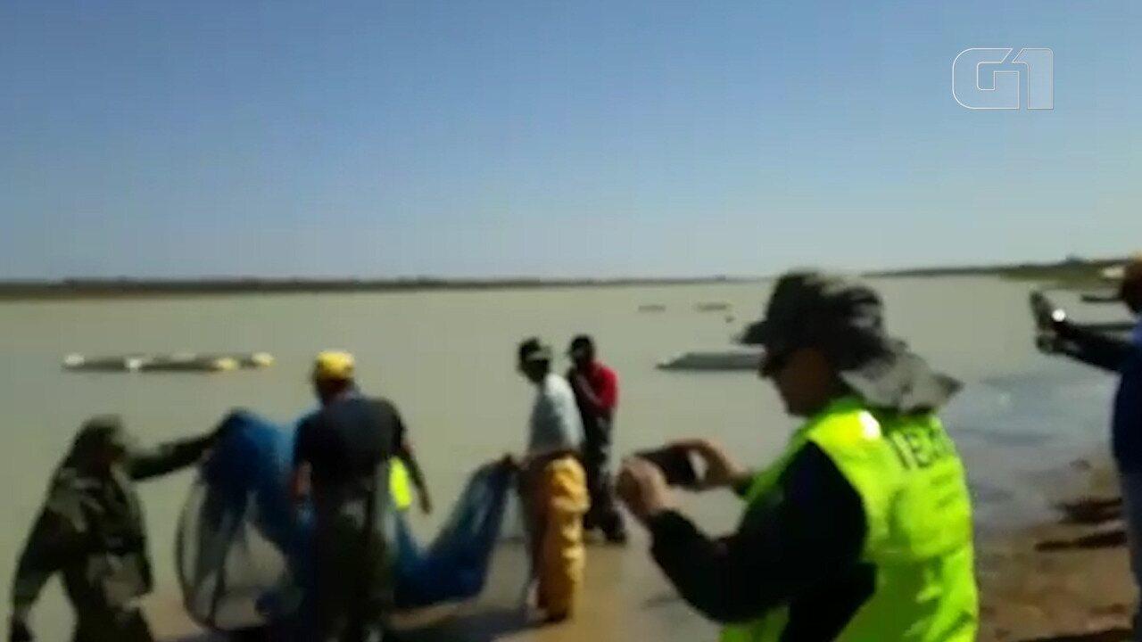 Ibama transfere cerca de 100 mil peixes para o Rio São Francisco após seca em lagoa