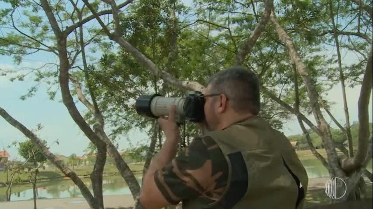 Veterinário troca o jaleco pela câmera para observar os pássaros